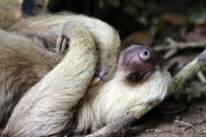 sloth sloth sloth